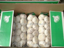 Garlic Type and Liliaceous Vegetabless Product Type white garlic