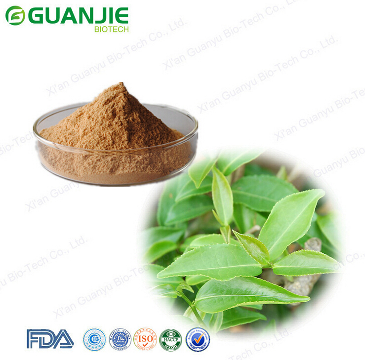 Weight Loss Pu Erh Tea Extract 10%-50% Polyphenols