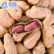 wholesale food delicious salted roasted peanuts
