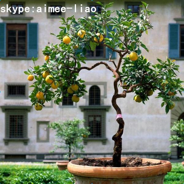 Q020306 ornamental artificial bonsai plant plastic tree for Different kinds of bonsai trees