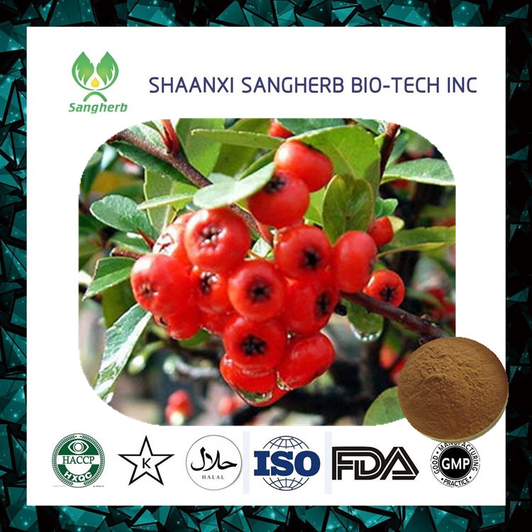 Good price Hawthorn Berry/Leaf Extract in bulk/ hawthorn berry Maslinic Acid manufactured China