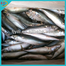 Cheap frozen seafood fish mackerel fish
