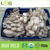 Hot sales high yield stable quality flat white oyster mushroom logs spawn bags