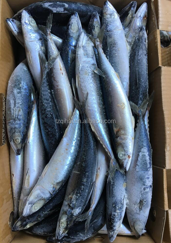Export Frozen Fish Local Seafood Mackerel For Marketing Sale 10kg 300-400g/pc