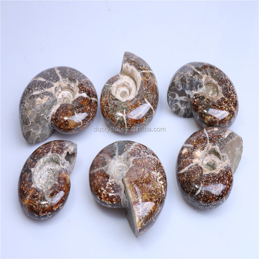 Wholesale top quality natural conch ammonite fossil nautilus fossil stone for decoration