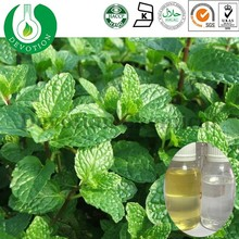 Organic Mentha Piperita Oil Mint Oil Bulk Peppermint oil