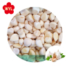 /product-detail/chinese-fresh-natural-garlic-export-price-to-vietnam-market-60815862613.html