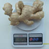 /product-detail/fresh-fat-ginger-air-ginger-ginger-root-1313713802.html