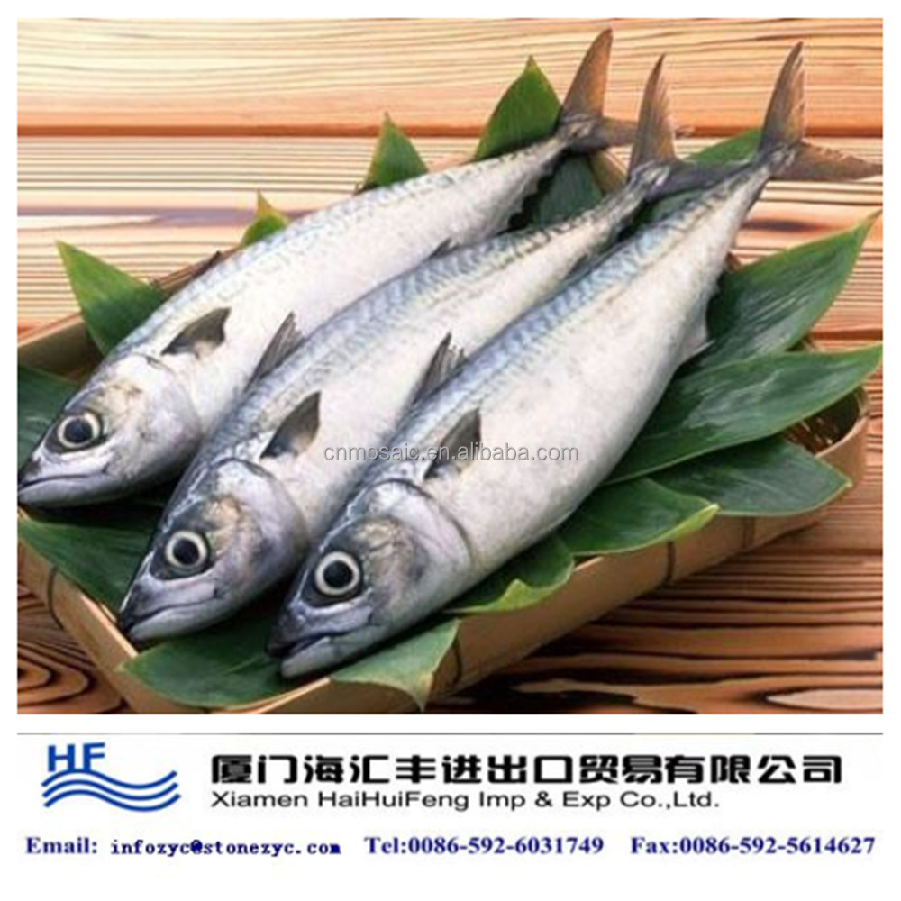 Chinese frozen whole Spanish mackerel