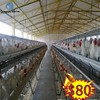 2013 china electro galvanized egg chicken layer battery cage