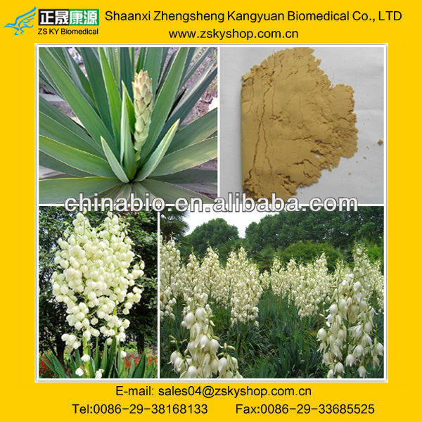 Natural Yucca Extract /Yucca schidigera extract from GMP manufacturer
