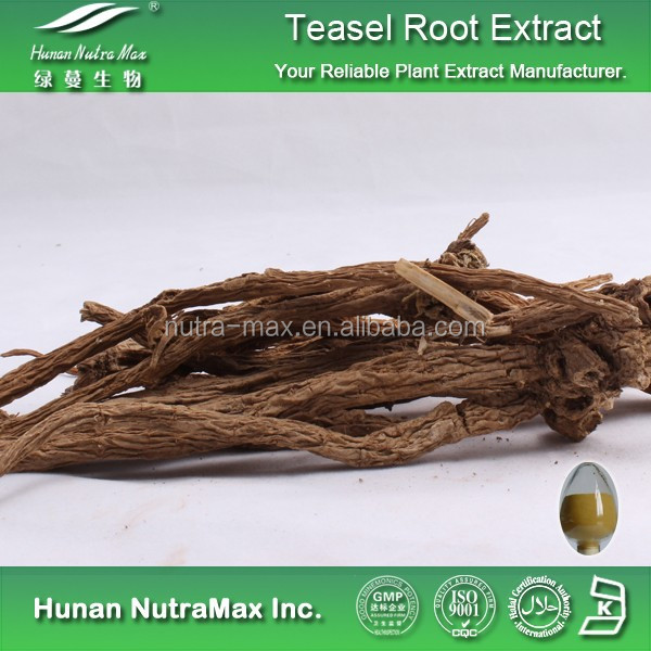 Teasel root Powder Extract,Radix dipsaci Extract, Dipsacus asperoids Extract 5:11 0:1