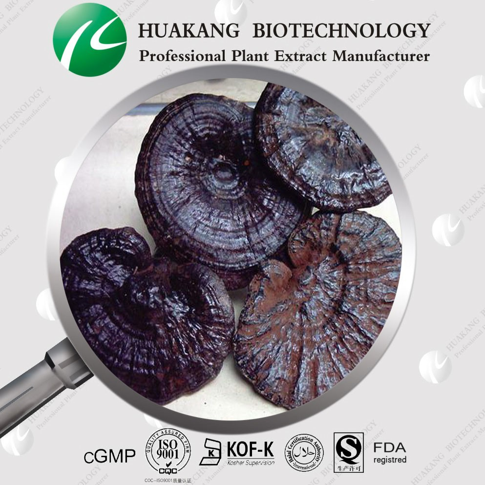 Raw Red Reishi Mushroom Powder Plant Extract