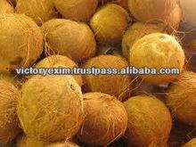 Indian matured high Quality husked coconut