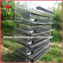Automatic Commercial Quail Breeding Layer Poultry Cages For Sale