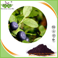 Billberry Extract/bilberry plants for sale