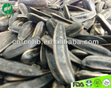 raw black long shape sunflower seeds