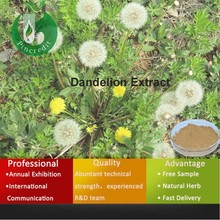 Dandelion root powder/Dandelion extract/Flavonoid 4% from China