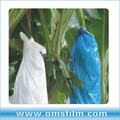 White/blue fruits bags for banana plantation