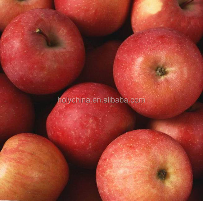 hot sale high quality kashmir apple