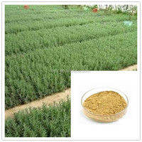 China water soluble antioxidant/rosemary extract/rosmarinic acid 5%