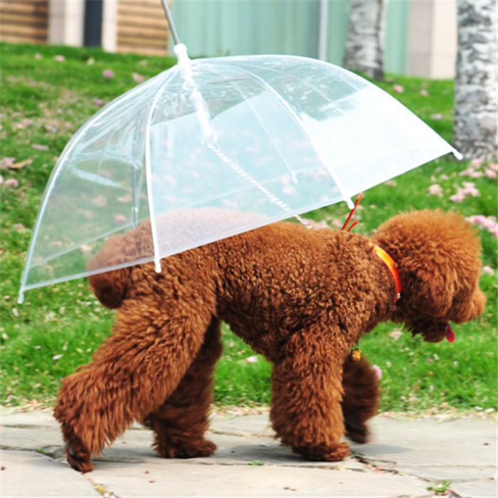 Will Be Hot Sell Promotional Pet Dog Umbrella In 2016