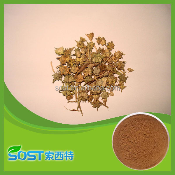 100% natural plant extract powder tribulus terrestris