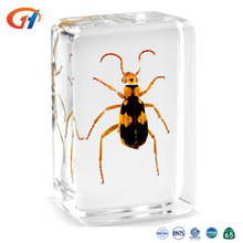 Real Insect Embedded Specimen Transparency Craft, Artificial Resin Material Crafts