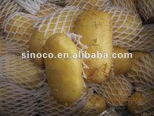 fresh sweet potato 10kg Ctn