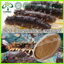 Sea cucumber extract/gamat (sea cucumber) extract/sea slug