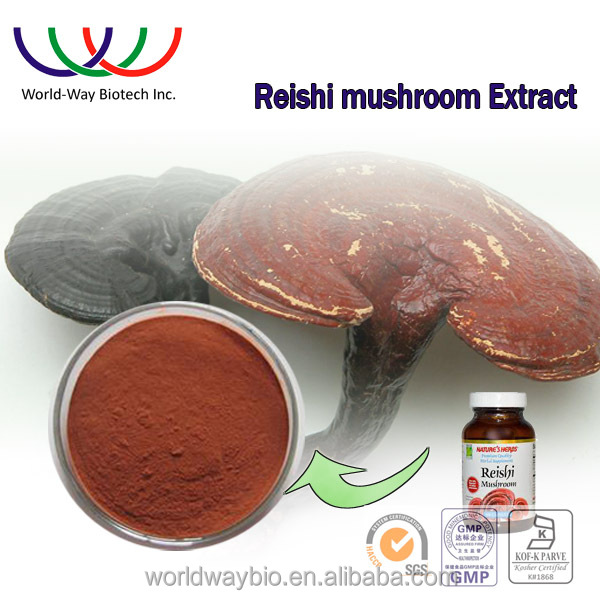 GMP HACCP KOSHER certified manufacturer hot sale 40% Triterpenes 10% polysaccharides red reishi mushroom extraction powder