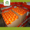 Hot selling sweet south african valencia orange with high quality