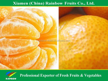 fruit importers of sweet juicy mandarin orange top quality with better price
