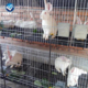 Hot sell Easy Clean Rabbit Cage /cheap used farming metal industrial fattening meat commercial rabbit cage(Factory)