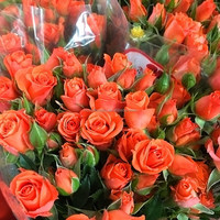 Color antique orange rose bushes