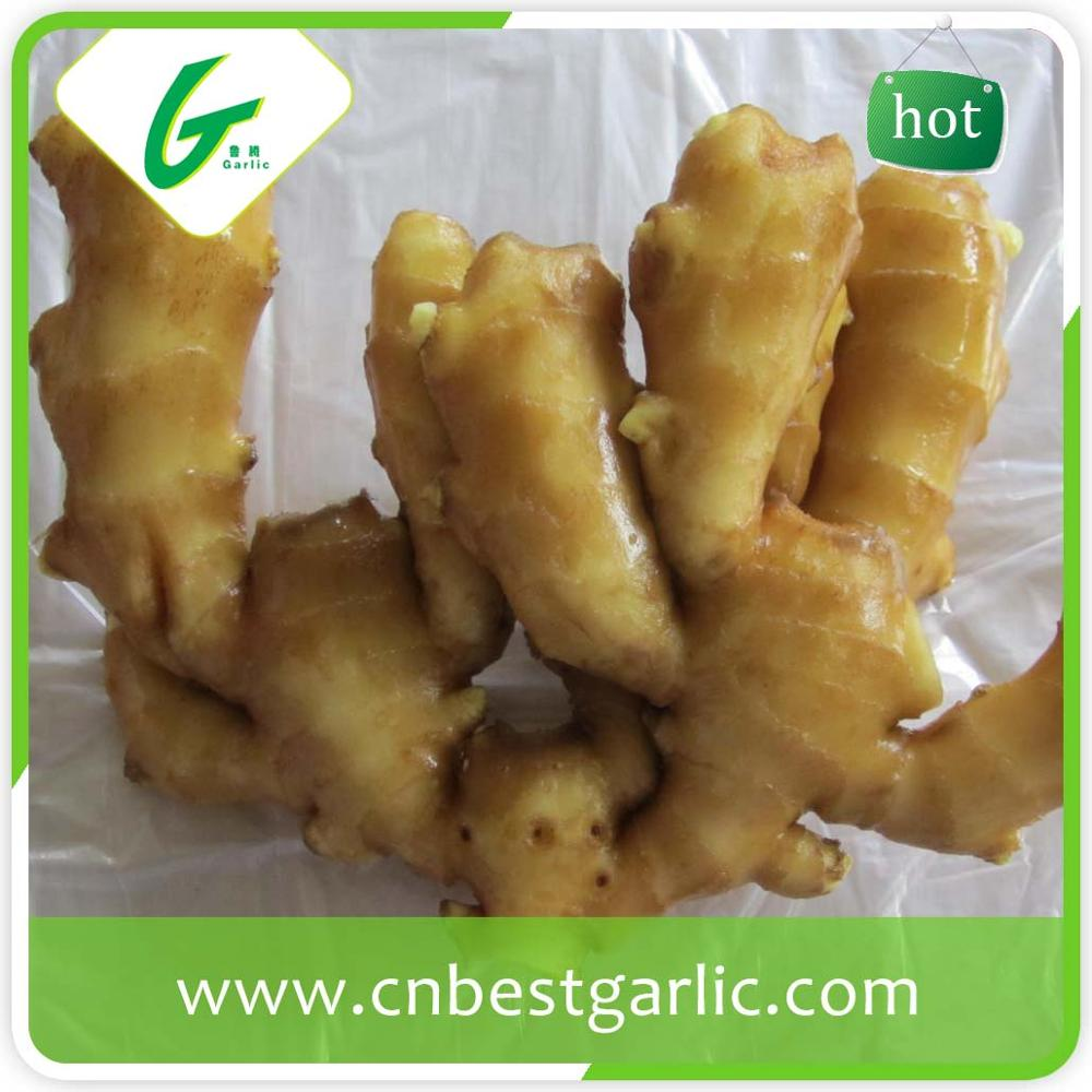 Factory manufacturer fresh ginger exporters vegetables and fruits
