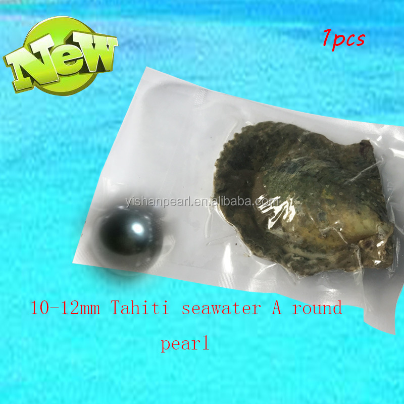 <strong>10</strong>-12mm grade A Tahiti pearl in akoya oyster wholesale amazing gift