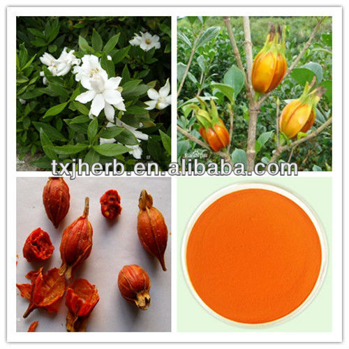 High Quality 100% Pure Natural Gardenia Fruit P.E with Gardenia yellow pigment