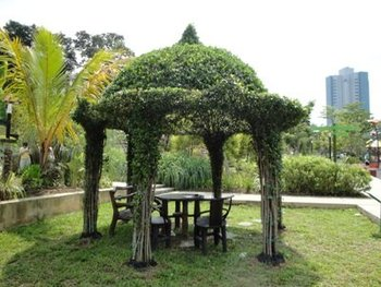 Ficus Microcarpa Topiary Plants