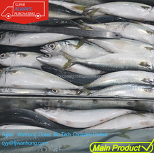cheap seafood fresh pacific mackerel whole round online frozen fish