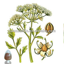Orangic Fennel leaf extract