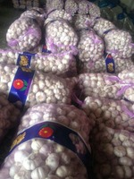 2015 new crop fresh garlic is hot sale