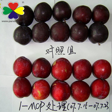 Fruit Antistaling Agent 1-methylcyclopropene /1-mcp 3.5%