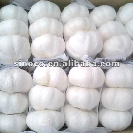 Jining garlic