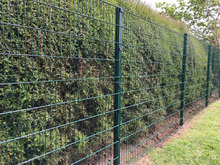 china suppliers welded wire mesh fence metal tree guards(ISO9001)