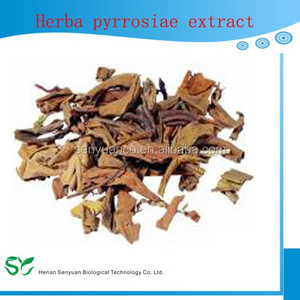 100%Natural Herba pyrrosiae extract/ Pyrrosia leaf extract