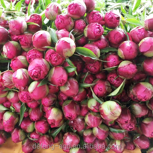 2018 wholesale fresh cut flower peony for wedding fresh peony flowers