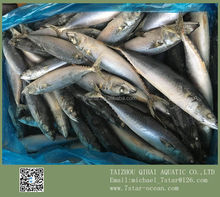 Blue Mackerel Rigs Sep 15kg 200-300g/pc