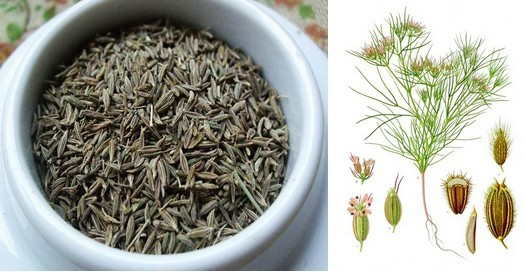Natural organic seasoning fennel