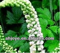 Medicine Grade Black Cohosh Extract 90% Triterpenoid Glycosides 2.5%HPLC
